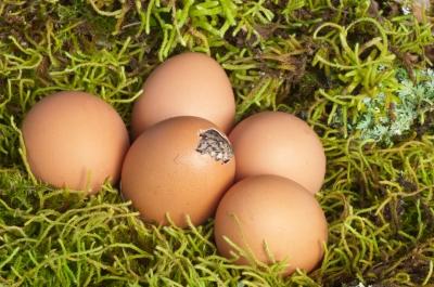 vajcia 2